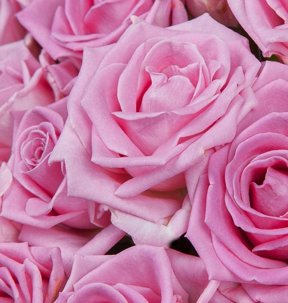 Букет роз Мечта (25, 51 или 75) – фото № 4