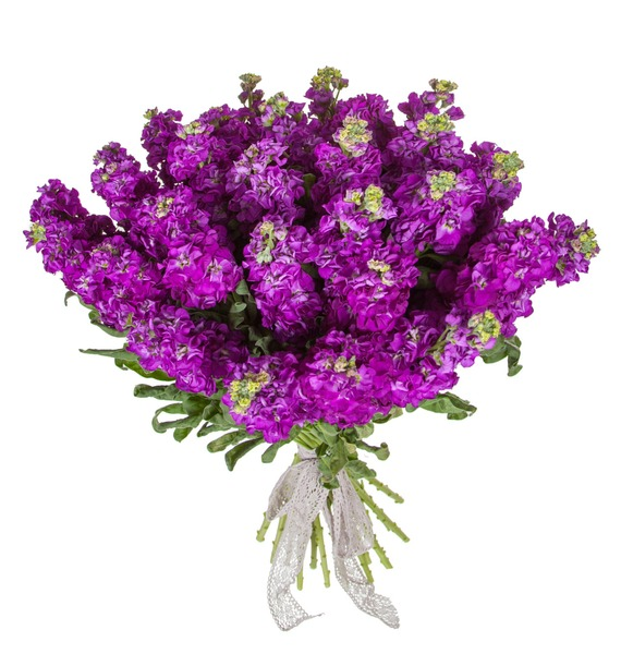 Букет фиолетовой маттиолы (15, 25 или 51) – фото № 4