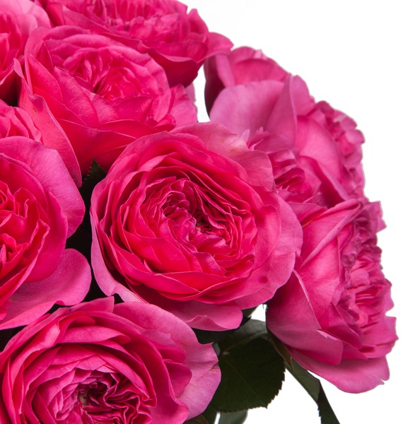 Букет из пионовидных роз Баронесса (15, 25 или 51) – фото № 4