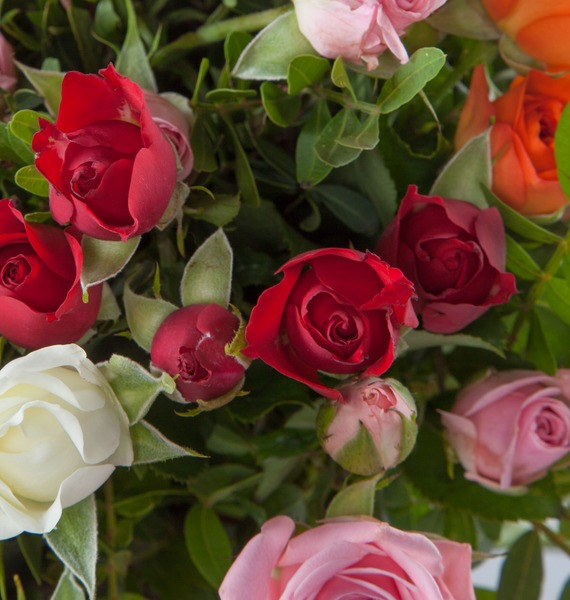 Bouquet of bush roses Transfiguration – photo #4