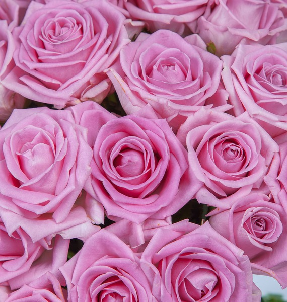 Букет роз Мечта (25, 51 или 75) – фото № 3