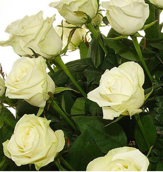 Букет белых роз Шкала нежности. Количество роз указываете Вы!