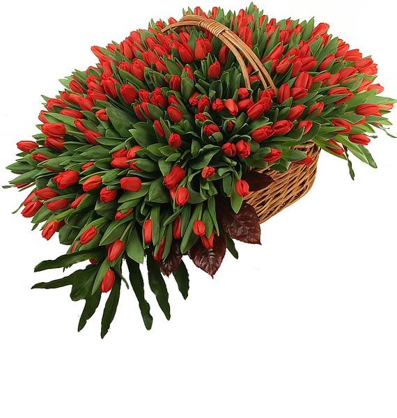Композиция из 301 красного тюльпана – фото № 2