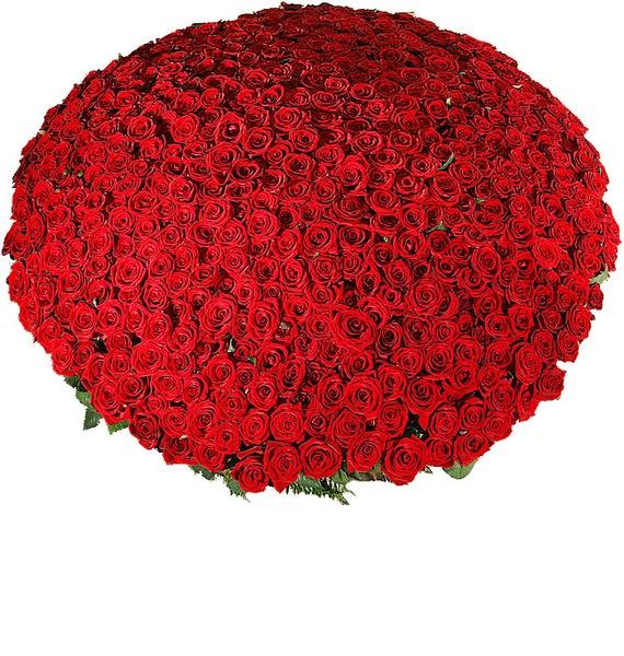Композиция из 501 розы Гран При Любовь всегда права! – фото № 5