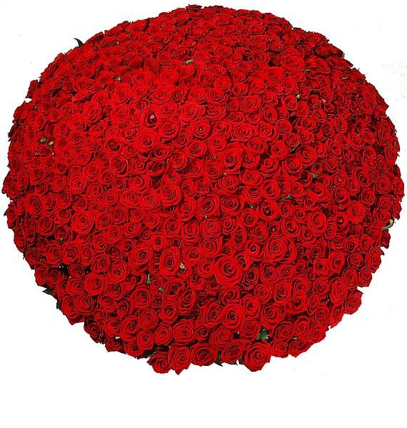 Композиция из 501 розы Гран При Любовь всегда права! – фото № 3
