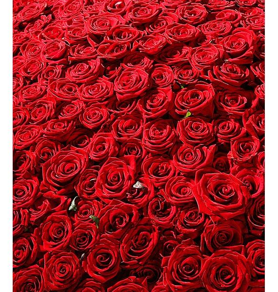 Композиция из 501 розы Гран При Любовь всегда права! – фото № 2