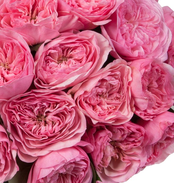 Bouquet of pion-shaped roses Maria Theresia (15, 25 or 51) – photo #3