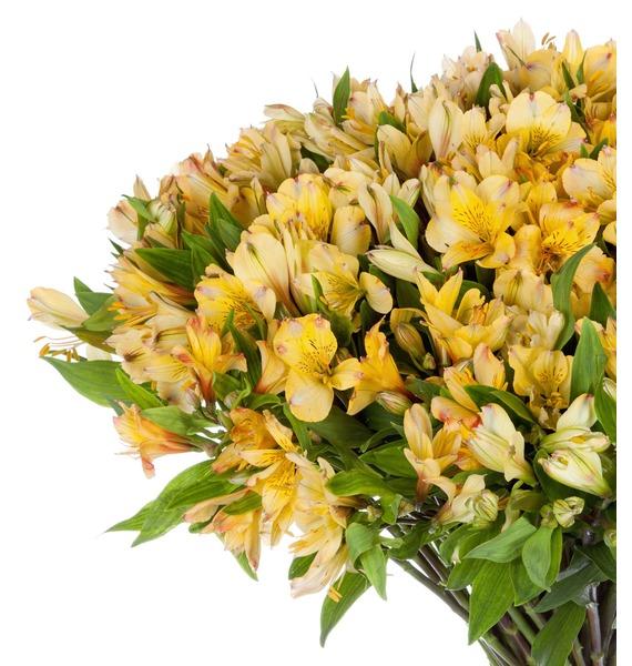 Bouquet Gold (25, 51 or 101 alstroemeria) – photo #4