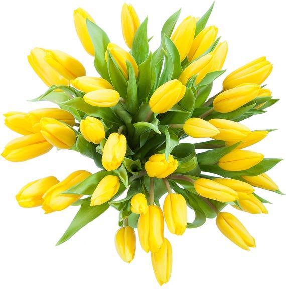 Букет тюльпанов Луч солнца (31 или 45) – фото № 4