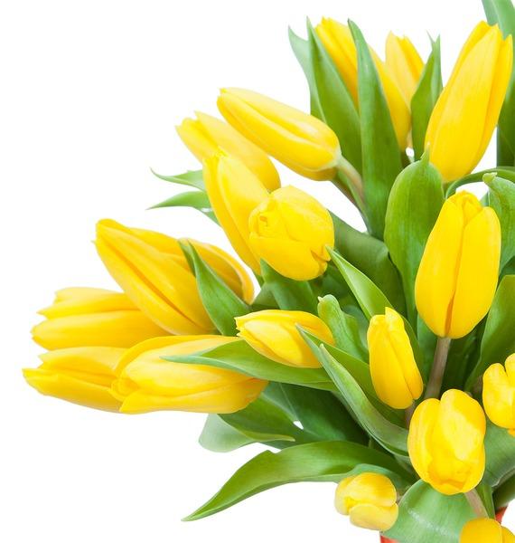 Букет тюльпанов Луч солнца (31 или 45) – фото № 3