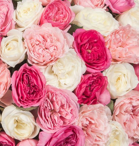 Композиция из пионовидных роз Восторг (101, 201, 301) – фото № 3