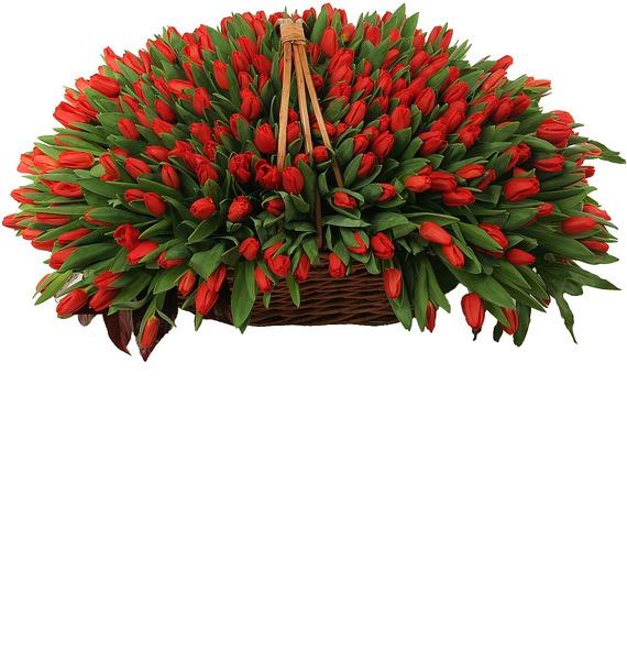 Композиция из 301 красного тюльпана – фото № 3
