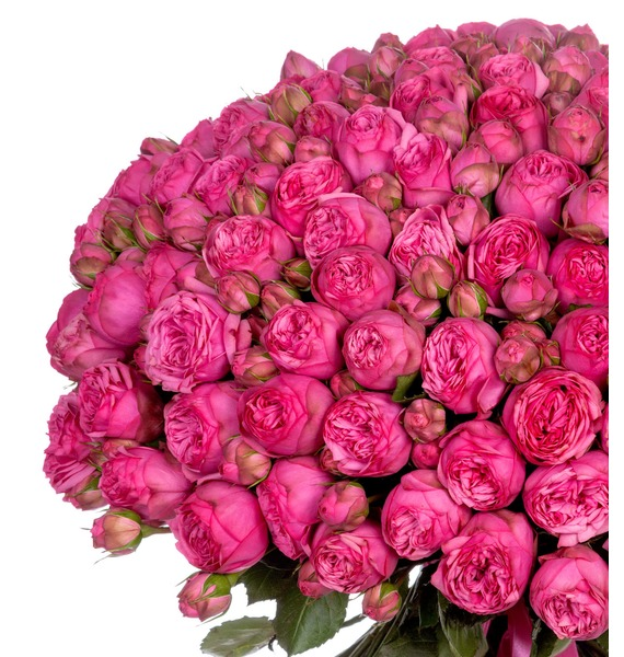 Bouquet of 151 pion-shaped roses Pink Piano – photo #4