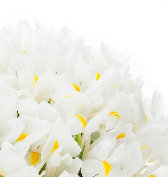 Букет ирисов White Magic (25, 51 или 101) – фото № 4