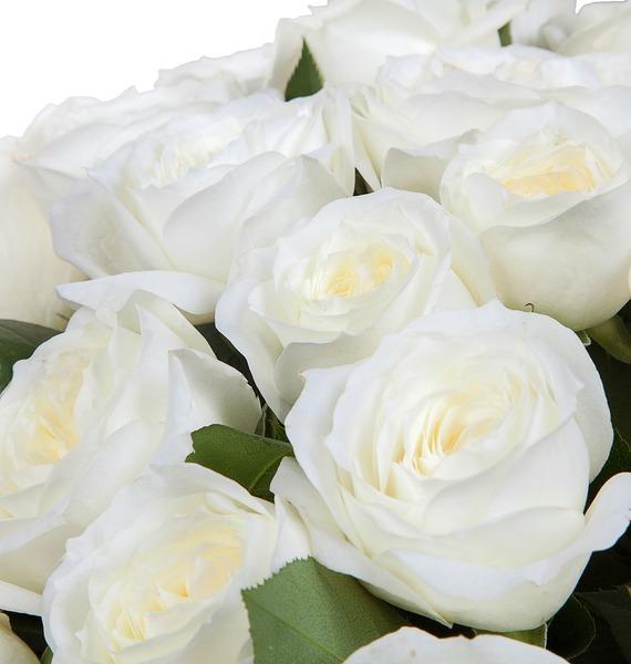 Букет из пионовидных роз Alabaster (15, 25 или 51) – фото № 3