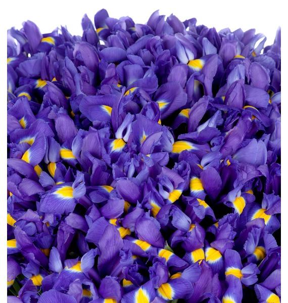Bouquet of irises Favorite eyes (101, 151 or 201 iris) – photo #2