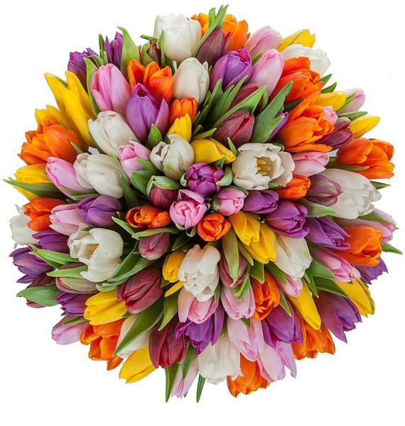 Букет из тюльпанов Краски любви (75 или 101) – фото № 4