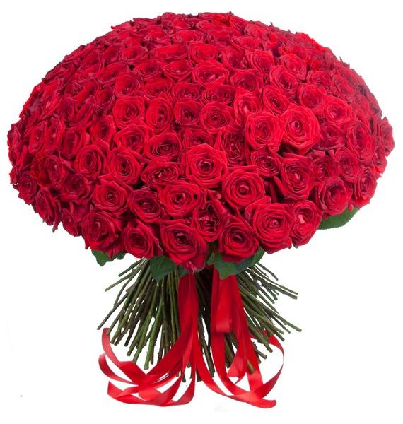 Букет из 201 красной розы «Ты - мой мир!» букет из кустовой розы огненный