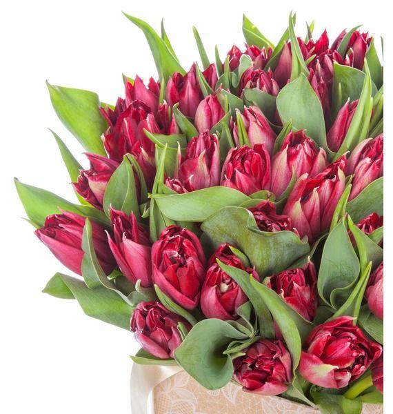 Пионовидные тюльпаны Robinho в вазе – фото № 2