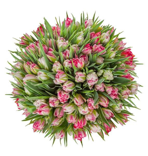 Букет пионовидных тюльпанов Flash Point (25, 51 или 101) – фото № 3