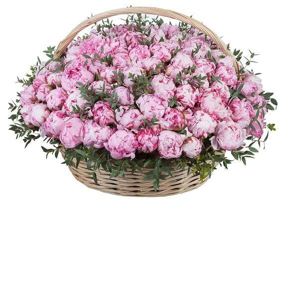 Композиция из пионов (101, 301 или 501) композиция cappucino 101 201 301 роза