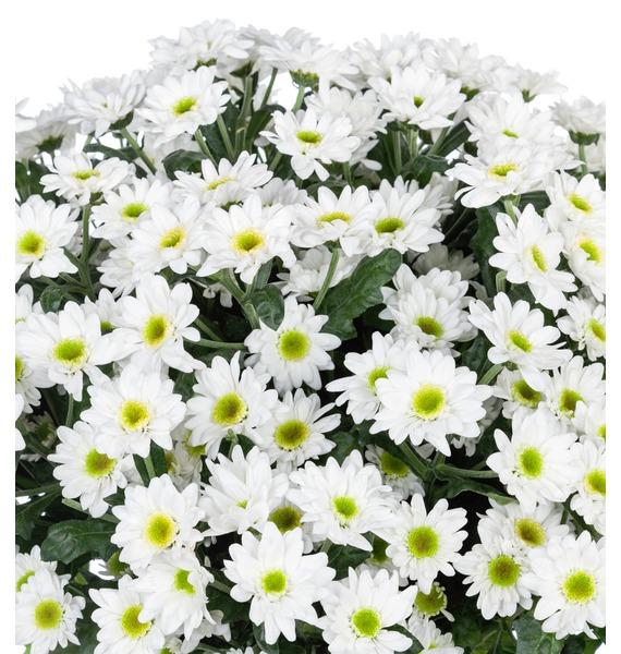Букет Летний аромат (15,25,51 или 101 хризантема) – фото № 4