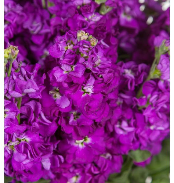 Букет фиолетовой маттиолы (15, 25 или 51) – фото № 2