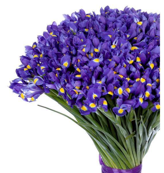 Bouquet of irises Favorite eyes (101, 151 or 201 iris) – photo #4