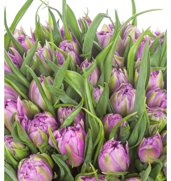 Пионовидные тюльпаны Double Price в вазе – фото № 4