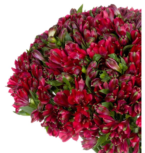 Bouquet Ruby (25, 51 or 101 alstroemeria) – photo #4