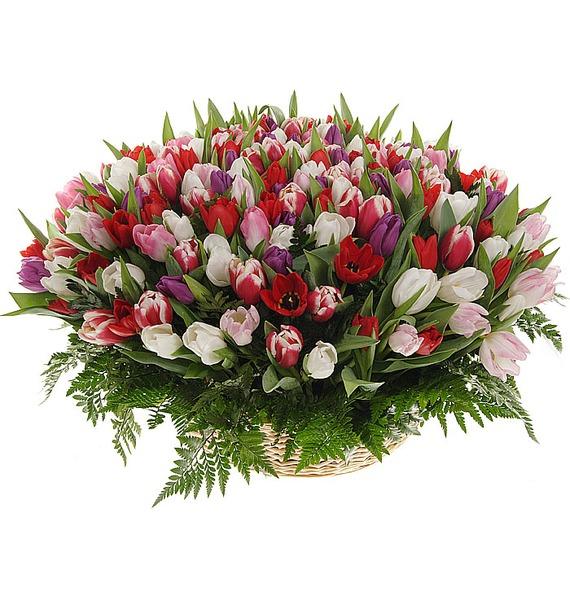 Композиция из 201 тюльпанa Весна моей души... – фото № 1