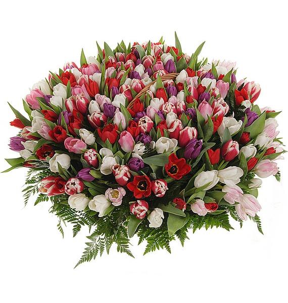 Композиция из 201 тюльпанa Весна моей души... – фото № 5