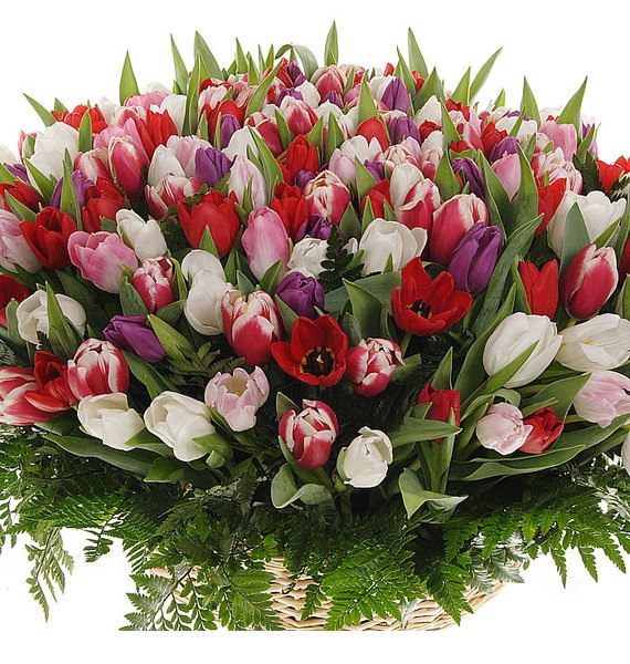Композиция из 201 тюльпанa Весна моей души... – фото № 3