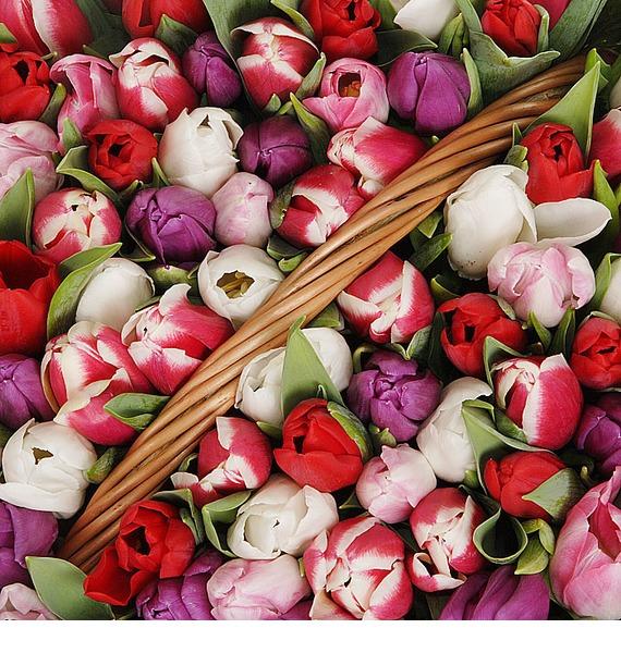 Композиция из 201 тюльпанa Весна моей души... – фото № 2