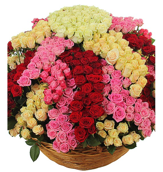 Composition Star flower of happiness (801 roses) – photo #1