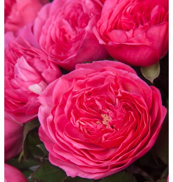 Композиция из 51 розы Baronessa – фото № 3