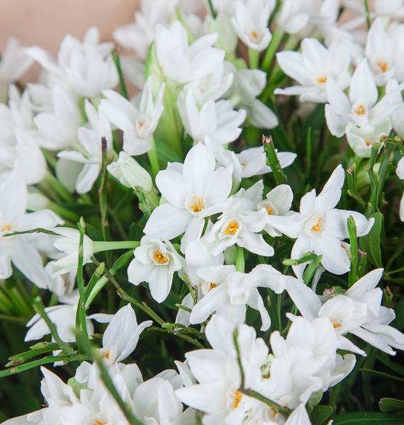 Букет В ожидании весны – фото № 3