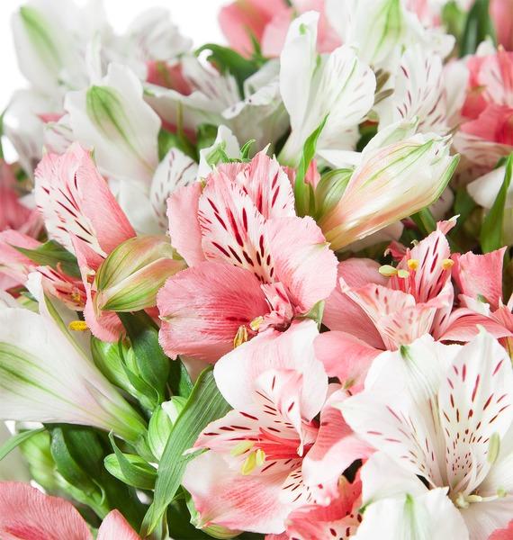 Bouquet of alstroemeria Pearl – photo #3