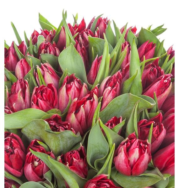 Пионовидные тюльпаны Robinho в вазе – фото № 4