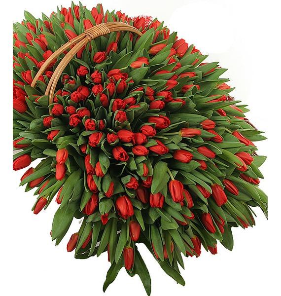 Композиция из 301 красного тюльпана – фото № 1