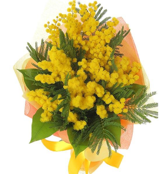 Цветы мимозы букеты из мимоз, цветов для