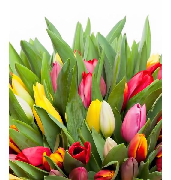 Букет из тюльпанов Понравится всем (31 или 51) – фото № 3