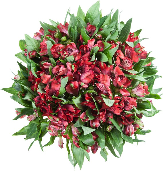 Bouquet Red Arrow – photo #5