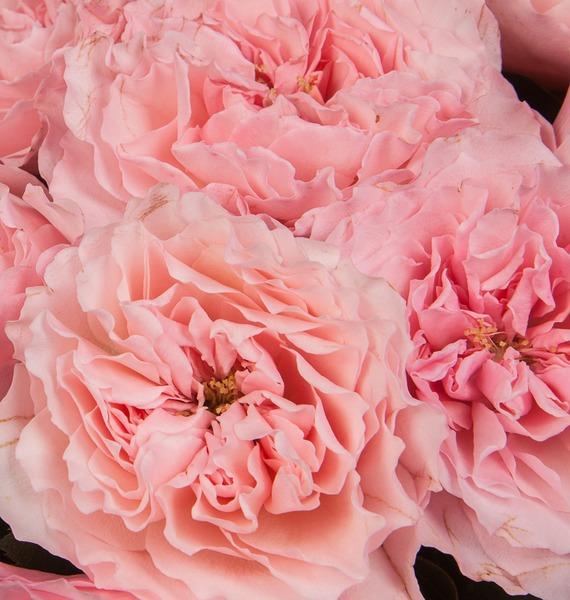Букет из пионовидных роз Mayras Rose (15, 25 или 51) – фото № 3
