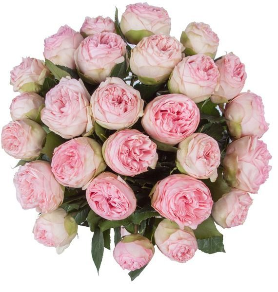 Букет из пионовидныз роз Bridal Piano (15, 25 или 51) – фото № 4