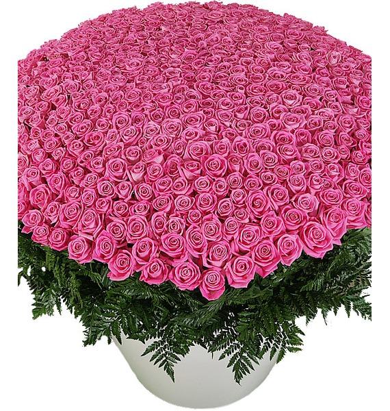 Композиция из 501 розовой розы Самой любимой розы для любимой