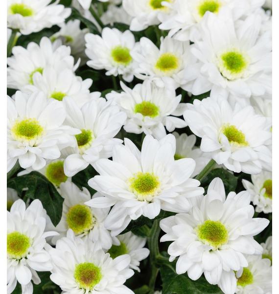 Букет Летний аромат (15,25,51 или 101 хризантема) – фото № 5