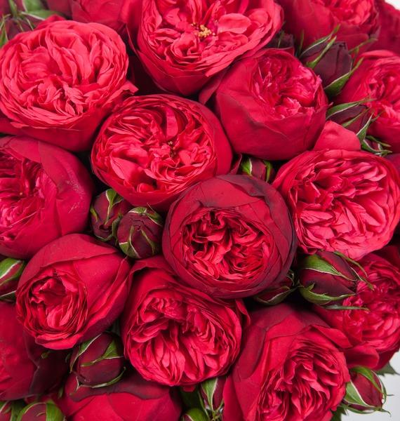 Букет из пионовидных роз Piano – фото № 4