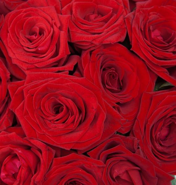 Букет роз Для Вас! (25, 51 или 75) – фото № 4