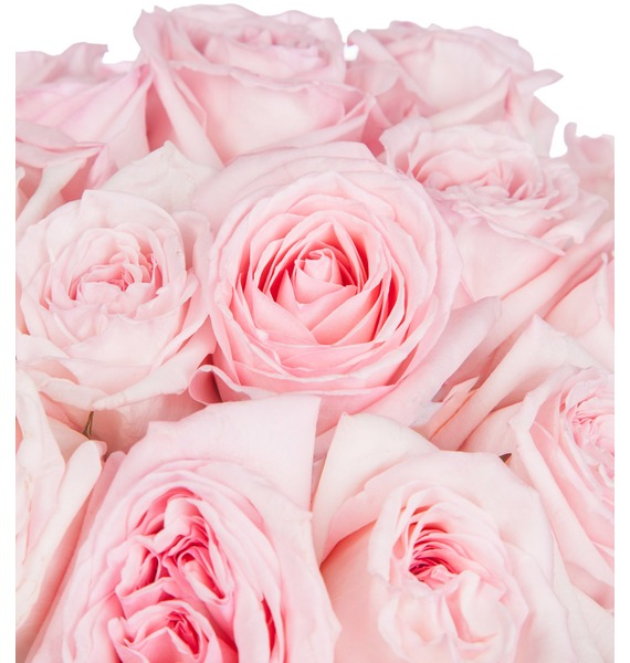 Bouquet of fragrant peony roses Pink O Hara – photo #2